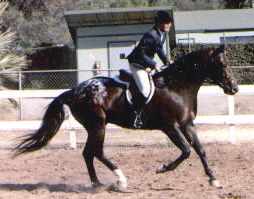 Firedancer cantering with Cuppie Ching